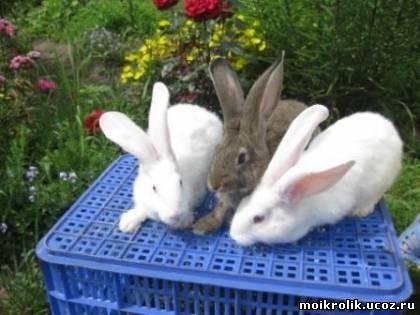 Мой кролик - Главная страница